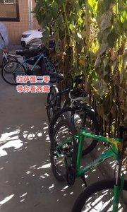 拉萨慢二零 带你看西藏! 羊湖小分队成功返回,友谊长存~ #西藏旅行 #拉萨骑行 #拉萨租自行车
