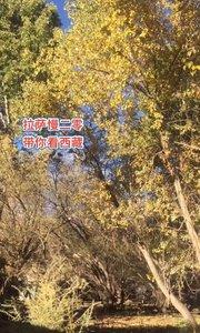 拉萨慢二零 带你看西藏! 雄巴拉曲接【嘀~】~ #西藏旅行 #拉萨骑行 #拉萨租自行车