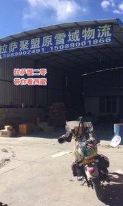 拉萨慢二零 带你看西藏! 双十二网购的机油今天终于见到了,可以开车了~#西藏旅行 #拉萨骑行 #拉萨租自行车