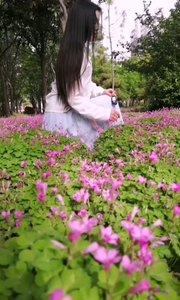 看见花花就不想错过,下车看看漂亮的花?