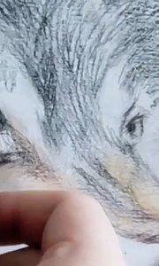 零基础学彩铅绘画!北京艺方美术学员任曙光彩铅动物绘画《孤狼》北京成人美术班#彩铅手绘##彩铅画狼##书画之美