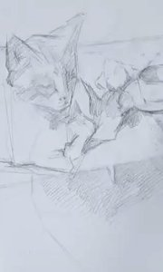北京艺方美术学员夏云汉油画静物作品《姜黄猫和玫瑰花》第一阶段 零基础学油画#我就是爱画画##我爱画油画##油画速成班##书画之美