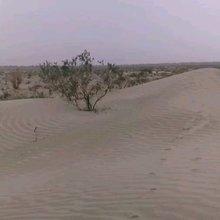 沙漠里顽强的生命力——红柳 胡杨