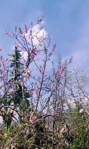 桃花朵朵开!
