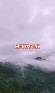 云雾满山飘