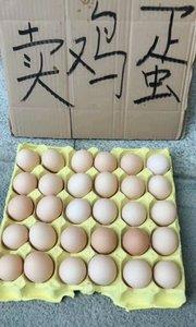 鸡蛋鸡蛋卖煤喽!?????