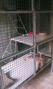 第二批猫咪入住猫别墅