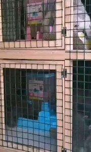 第一批猫咪入住猫别墅