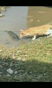 高冷的鱼.猫也拿她没办法