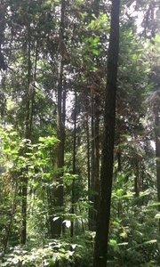 美丽的山林,爽心怡情就是太热了。???