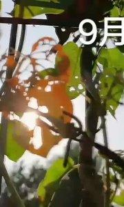 #9月原创视频达人赛  今日秋分,属于每一个人的丰收节。