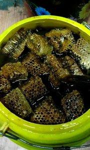 尼泊尔??野生蜂蜜25天到中国