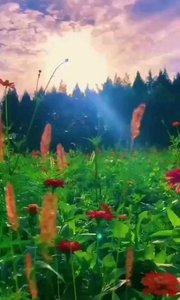 #书画之美 #户外动起来 #带着花椒去旅行 一夕之间,季节就转换了冷暖 一岁一相思,一夜一秋凉。 黎明时分,有细雨敲窗,秋天的雨多了份缠绵和清凉。一个人时看尘世有点荒凉,与大家相伴,就多了风情和浪漫。