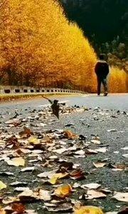 #户外动起来 #书画之美 #带着花椒去旅行 一场秋雨一场寒  两行热泪是路人。