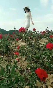 仙女菜花。