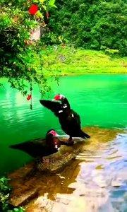 当生活, 再也没有什么惊喜要感动的时候;    你会发现, 其实孤独就是最大的自由。。。
