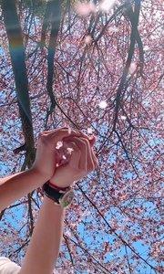 我喜欢 三月的风 四月的雨  不落的太阳 关注我的你