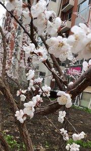花开在美美季节,美丽的心情因为有你们!