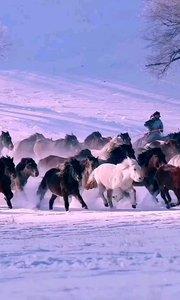 《塞北情》  我在塞北放牧 驱赶着奔腾的马群 风雪中我们傲然前行 到处都留下我们潇洒的身影……