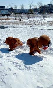 #一月打卡挑战赛 看看这雪景美吧,两个娃娃开始打雪仗了,哈哈??