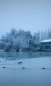 雪中的西湖美的不要不要的