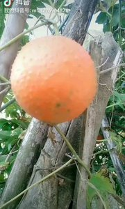 谁认识这个果,也算是一个行家!