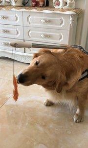 吃不到的肉肉,实力坑狗
