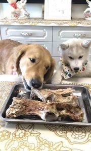 不同狗狗一起吃骨头的表现