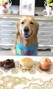 蛋黄选汉堡 有点出乎意料,以为狗狗最喜欢骨头