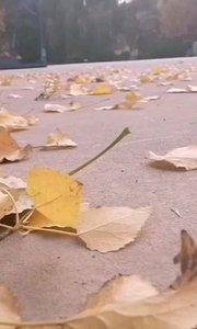 #秋天落叶 天气冷了吧,冬天还远吗?