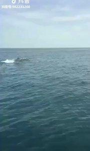 快看好多海豚,难得一见。。。。。