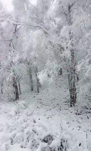雪下的有点大