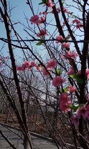 春天到了?