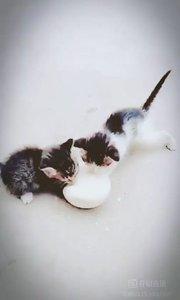 #户外进行时 #六一来了要快乐 ???在线征集两个小可爱的名字,初步决定一个黑白的叫雪花,一个狸猫叫闹闹,因为它实在是太重太闹腾了???雪花因为它的毛色很像然后又挺温柔的,两个粘人的小吃货,只要做好吃的就一直在你边上一直待着叫???