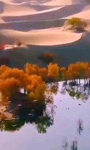 能在新疆罗布人村看到沙漠胡杨,还?#24515;?#24471;的大漠雁归! 特与大家分享大美新疆…