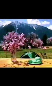 错过了西藏,就错过了中国一半的美景; 错过了林芝,就错过了中国最美的春天。