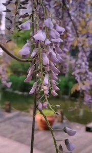 春暖花开,鸟语花香,简单的生活,简单爱你心里所爱