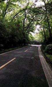 悠闲午后漫步在这样的林荫大道上,感受美好时光,不经意之间走到了明孝陵七号门,相当宁静的感觉。