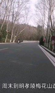 周末户外骑行,钟山风景区经典骑行线路,周末不少骑友骑行中。。。,待春暖花开这段路便是天然氧吧#户外动起来 #骑行 #周末 #南京