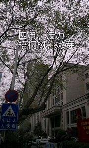 南京的行道树梧桐树新发嫩芽,万物复苏充满活力,一切都是崭新的,城市也慢慢恢复常态和活力,疫情终将过去,城市有将活力四射。#户外动起来 #南京 #春天 #旅游