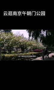 云逛南京午朝门公园,绣球花开的相当完美,午朝门市民晨练,休闲的好地方,这是当年明故宫的午门。#户外进行时 #花椒好声音 #南京 #云旅游