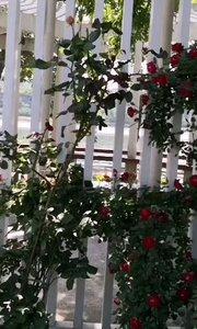 南京玄武湖公园免费开放,鸟语花香,玄武湖方圆近五里,分作五洲(环洲、樱洲、菱洲、梁洲、翠洲),洲洲堤桥相通,环境优美。#户外进行时 #南京 #旅游 #玄武湖