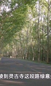 南京钟山风景区林荫大道,散步、骑行超有感觉,感受宁静午后时光,天然氧吧,这也是户外骑行经典骑行路段#9月原创视频达人赛 #9月打卡挑战 #南京 #旅游