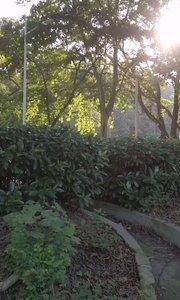 """南京中山风景区灵谷胜境附近有一处小景感觉相当不错,树林倒影在水中自然形成一幅画,感觉和""""天空之镜""""一样,加上夕阳夕照,自然之美#9月原创视频达人赛 #9月打卡挑战 #南京 #旅游"""