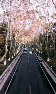 周末前往明孝陵赏秋色的游客非常多,从五号门出四方城感觉挺不错的,从过节天桥这样拍过去可以欣赏到最美的深秋梧桐大道,车来车往相当热闹。#十一月打卡挑战 #又嗨又野在玩乐 #旅游 #南京 #深秋