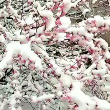 贵州下大雪了。