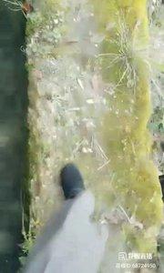 """#花椒星闻 #带着花椒去旅行 #狐xiao @花椒热点  @狐Xiao籼儿?✨? 很随和,每天带着花椒户外直播,几乎不间断。今天开播走在盘山小路上,一面是山涧一面是蓄水池,看@狐Xiao籼儿?✨? 行走起来如履平地,貌似别人不是这样,要晕倒的节奏,友情提示:恐高千万别点开视频!脚下的路仅有一尺左右宽,潮湿光滑,常年有青苔附着在地面上。@花椒热点  由此及彼目前我们处于特殊时期,全国上下都在战yi,我们要临危不惧,坚持做到""""少出门,勤洗手,戴口罩""""勤!消毒一起加油!抵御yi  qing! 41报道   坚强"""