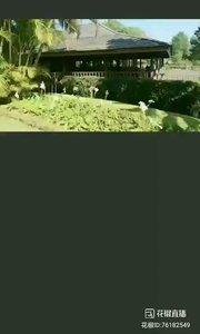 #花椒星闻 #带着花椒去旅行 #花椒派对 #中国加油万众一心 #阿义自驾缅甸 @花椒热点  @阿义自驾带你看画一样的佛国缅甸 由于特殊时期在缅甸逗留几天,闲暇时间一起领略缅甸的美景跟异国的风土人情。@花椒热点  今天带大家来到缅甸的曼得嘞公园景区,饭点儿来一家高档咖啡厅,风景雅致。装修豪华,那茶几都是桦梨木做的,外加外面的优美景致,这里的人很懂得养生,格调真心不一般,@阿义自驾带你看画一样的佛国缅甸 点了一份炒面一份酸汤,一瓶啤酒,大概要1万缅币。 @阿义自驾带你看画一样的佛国缅甸 风景跟国内有区别,这里