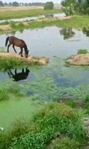 """人有失足,马有失蹄,你一定见过很多失足的人,但是你肯定没有见过失蹄的马,今天就带你看一看真实版的""""马有失蹄"""""""