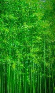 充满翠绿的竹子